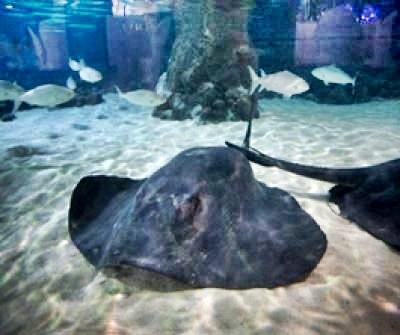 Kelly Tarltons Underwater World