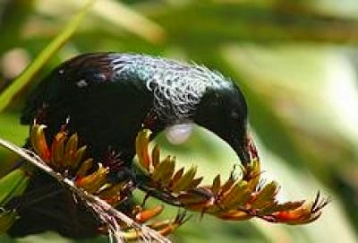 Zealandia Karori Wildlife Sanctuary