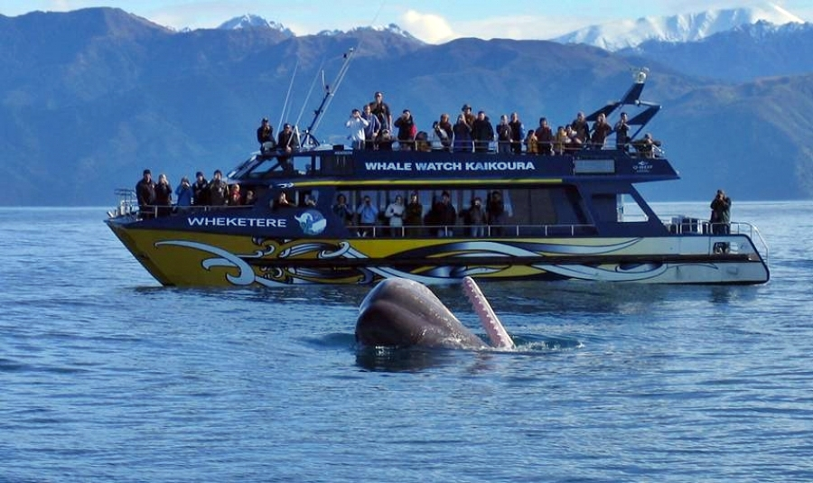 Kaikoura Day Tour including Whale Watch