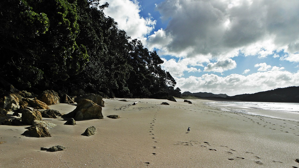 Hot Water Beach, Coromandel