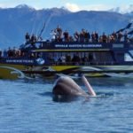whalewatch.co_.nz_-572x340
