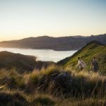 Port Hills, Christchurch, Photo Credit: Julian Apse
